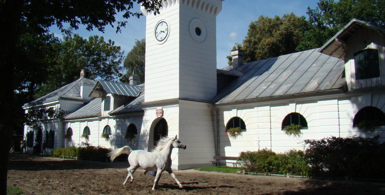 Na janowskiej aukcji sprzedano trzy konie, a nie sześć
