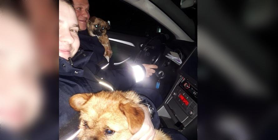 Policjanci uratowali szczeniaki
