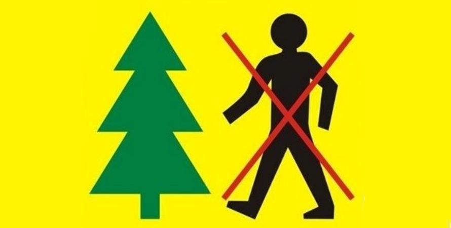 Leśnicy walczą z chrabąszczami. Zakaz wstępu do lasu