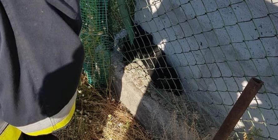 Strażacy uratowali kundelka