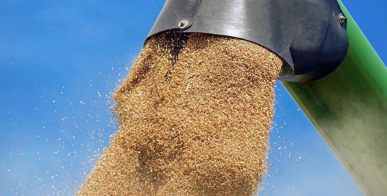 Susza kolejny rok dobija rolników