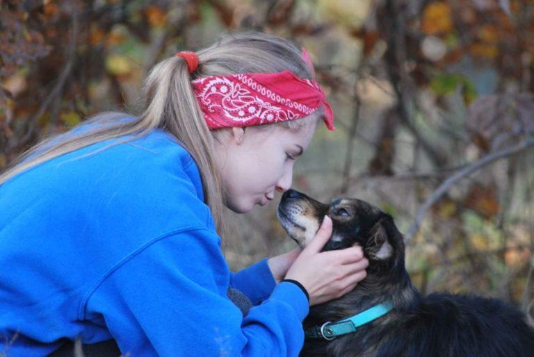 O Gilmorze – psie, który szuka domu