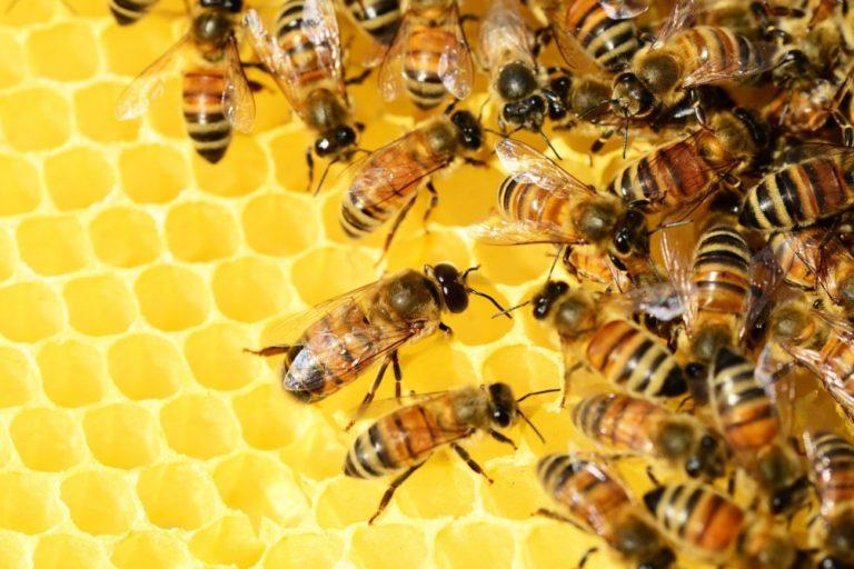 Pszczoły to nie tylko miód