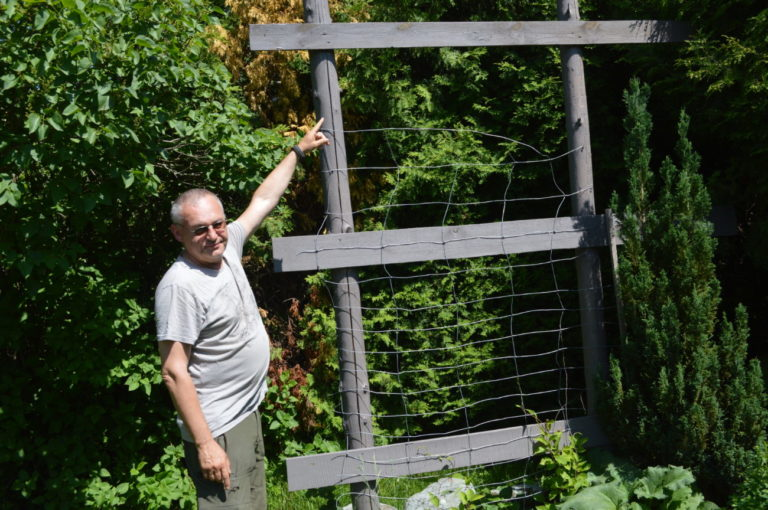 Ginący gatunek fioletowej pszczoły pojawił się na Podlasiu