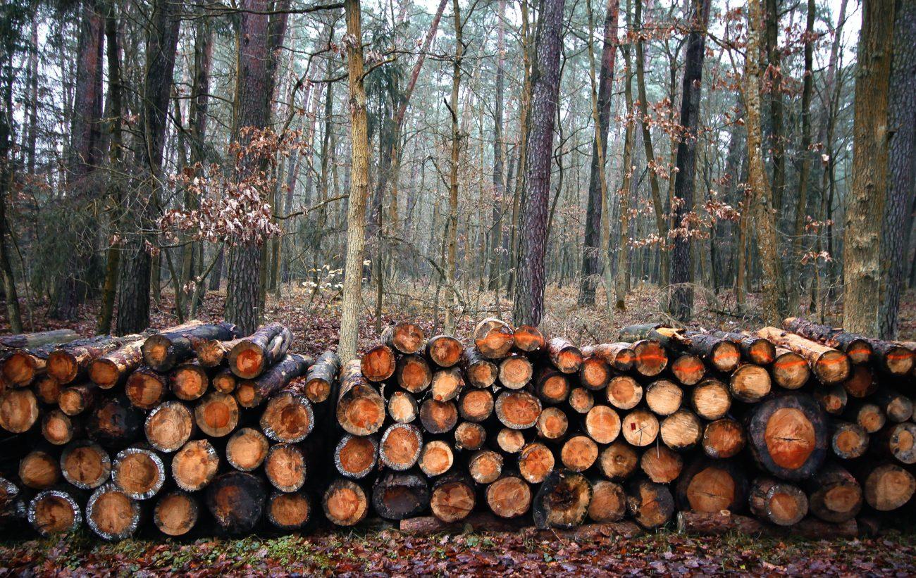 Wzrost VAT na drewno opałowe uderzy w najbiedniejszych