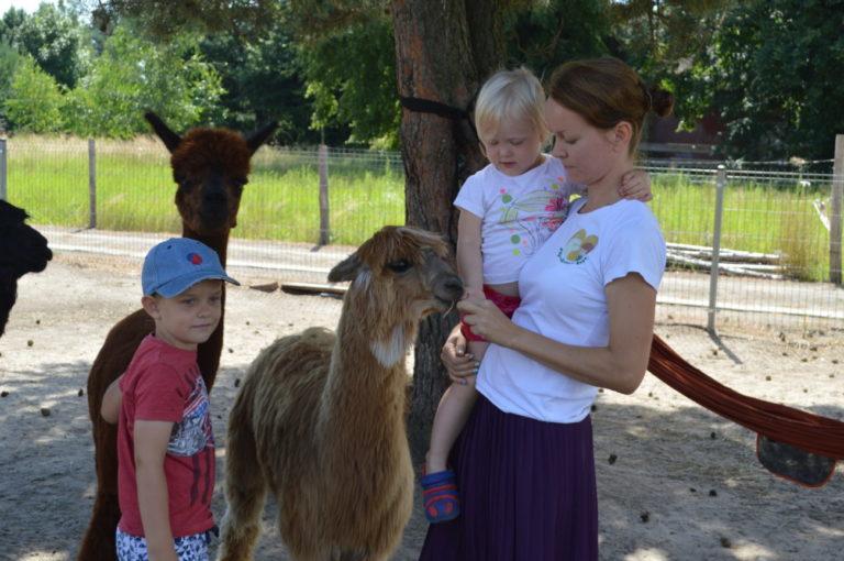 Alpakoterapia, czyli jak zwierzęta pomagają dzieciom
