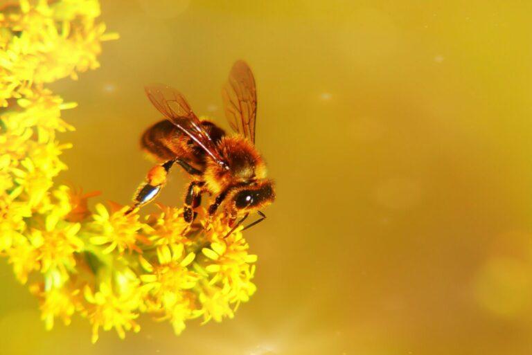 Konkurs: Co zawdzięczam pszczołom?