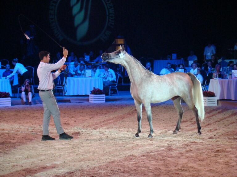 Aukcja koni dostępna dla publiczności